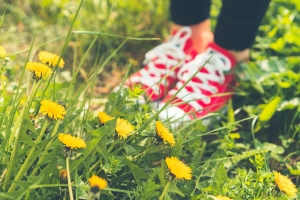 red-happy-shoes-in-grass-and-dandelions-picjumbo-com
